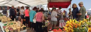 Fall Food Market Oakville Ontario